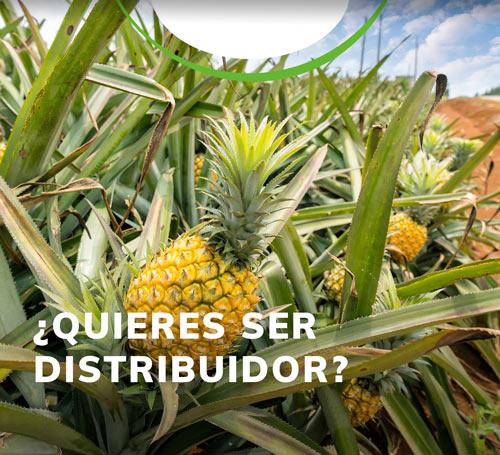 distibuidores-Importador-y-distribuidor-de-productos-agricolas-yaser